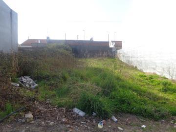 Lote / Braga, Panóias