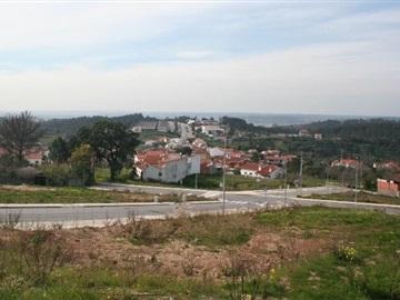 Lote / Coimbra, Maínça