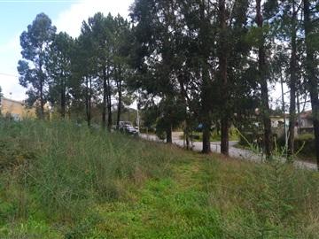 Lote / Vila Verde, Vila Verde e Barbudo