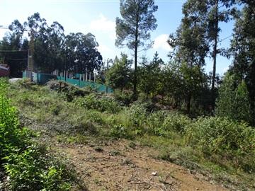 Plot / Vila Verde, Ribeira do Neiva