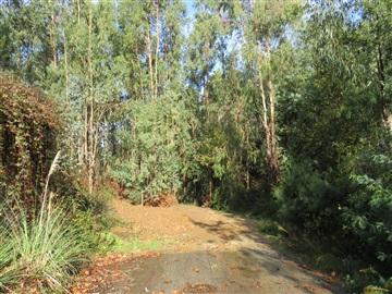Rustic Plot / Oliveira de Azeméis, São Roque