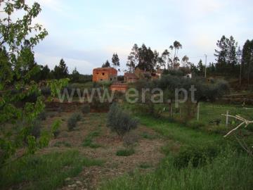 Terrain / Castelo Branco, Monte Gordo