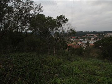 Terrain / Coimbra, Antanhol