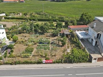 Terrain / Guimarães, Pinheiro