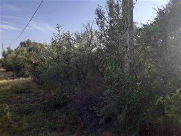 Terrain rural / Faro, Conceição e Estoi