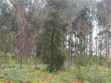Terrain rural / Leiria, Santa Catarina da Serra e Chainça
