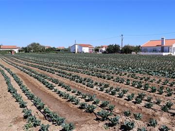 Terrain urbain / Peniche, Atouguia da Baleia