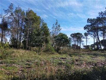 Terreno / Figueira da Foz, Quiaios