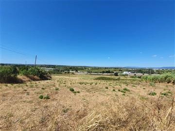 Terreno Para Construção / Coimbra, Taveiro