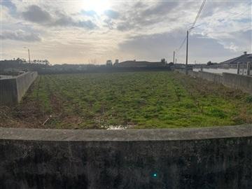 Terreno Para Construção / Oliveira de Azeméis, Loureiro