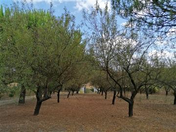 Terreno Rústico / Cartaxo, Pontével