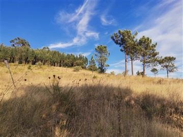 Terreno Rústico / Ourém, Espite