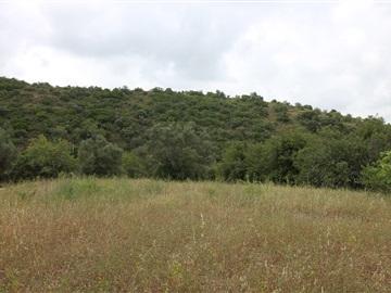 Terreno Rústico / Tavira, Santa Catarina da Fonte do Bispo